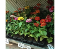 Мал гор. растения в ассортименте. от
